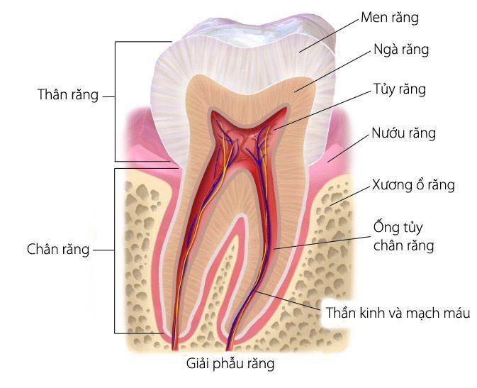 bọc răng sứ có cần lấy tủy không
